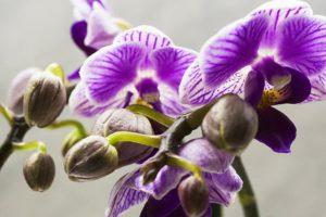 saiba como cultivar orquideas floridas