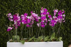 veja um arranjo de orquidea para festa