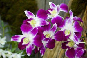 imagem de orquidea artificial