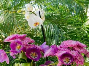 jardim de orquideas para embelezar mais ainda o seu lar