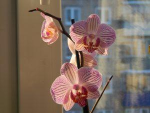 cultivar orquideas em casa