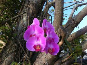 orquideas epífitas se adaptam em árvores