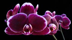 saber tudo sobre orquídeas faz bem para a cultivação