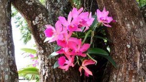 orquidea em árvore fica ainda mais linda