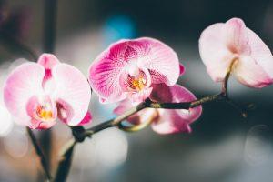 Algumas orquideas de interior se desenvolvem bem em vasos porosos