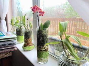 orquideas em vaso de vidro