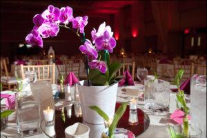 orquídeas decorativas para festas
