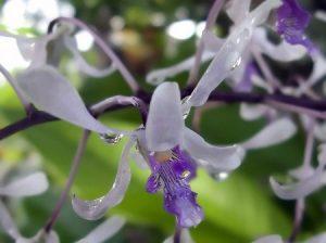 orquidea molhada na natureza