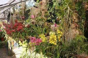 jardim de orquídeas florido o ano inteiro é possível