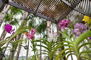 no inverno as orquídeas precisam de mais proteção