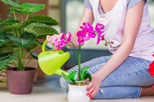 orquídeas como cuidar