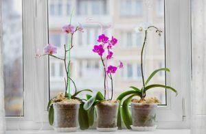 vaso para orquideas
