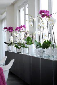 Como Cuidar Orquideas Dentro de Casa