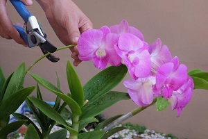 podar orquídea