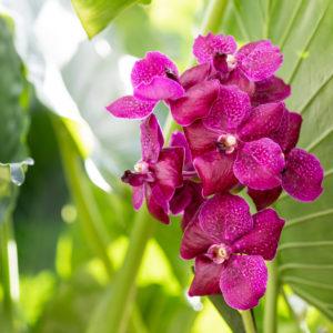 Adubo para orquidea organico e inorganico
