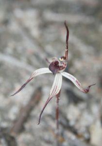 Como Cuidar de Orquideas Onde Neva