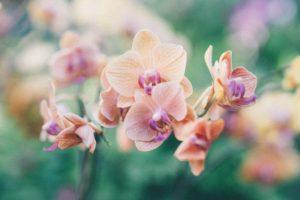 Mini orquidea