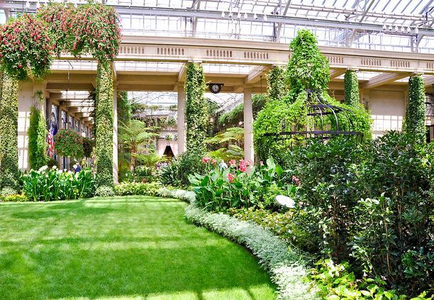 Flores de Jardim e Orquídeas