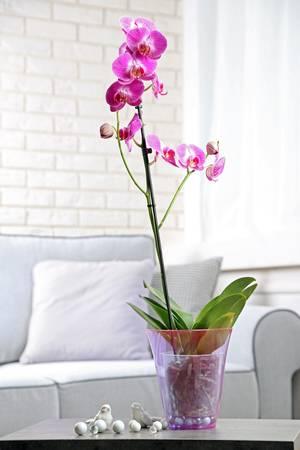 orquidea artificial ou natural